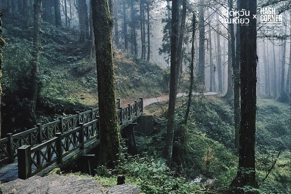taiwan-alone-alishan-08