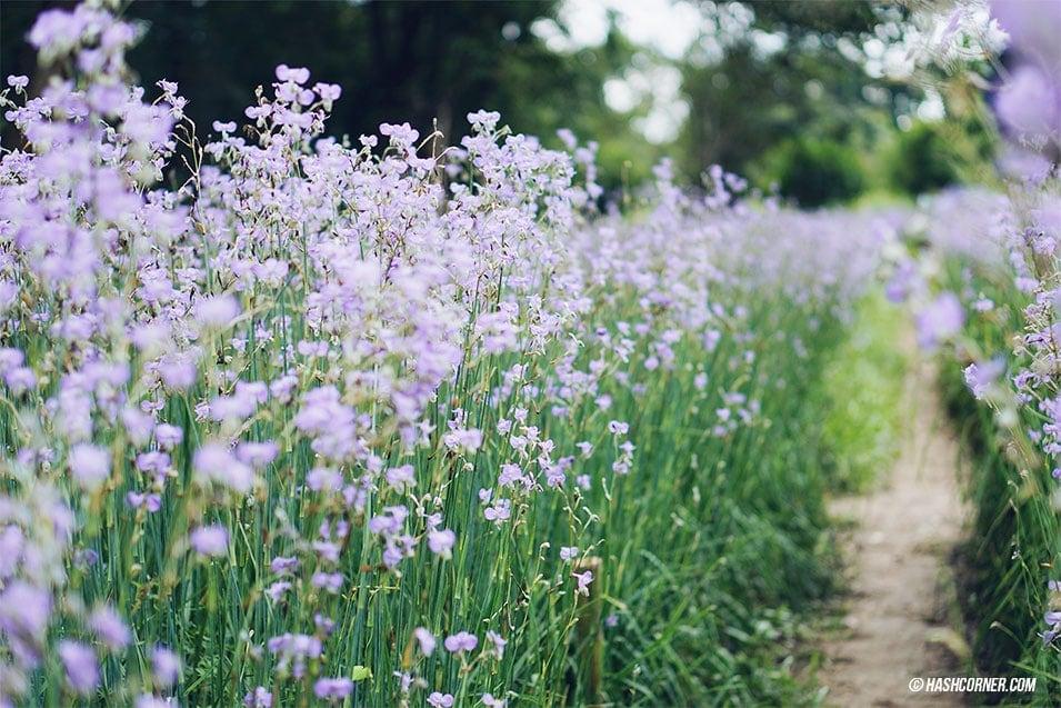 nghon-nak-flower-prachinburi-02