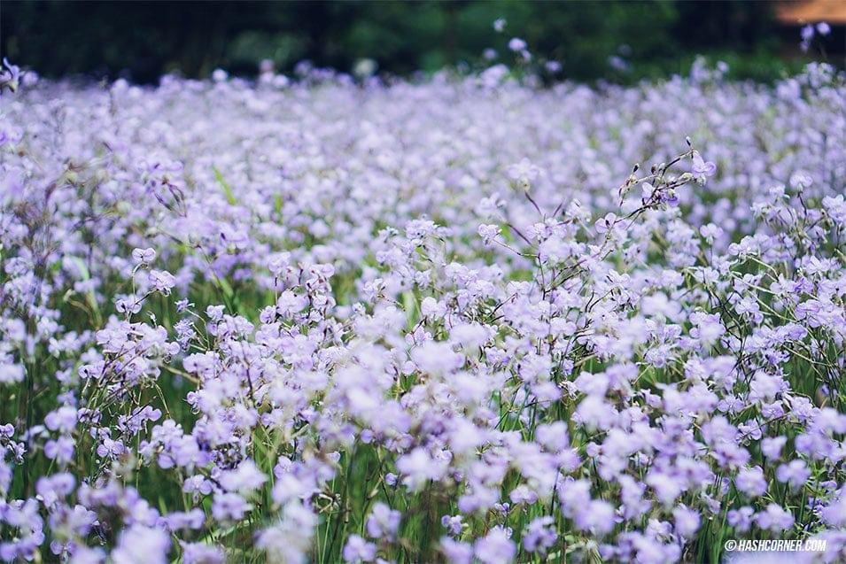 nghon-nak-flower-prachinburi-03