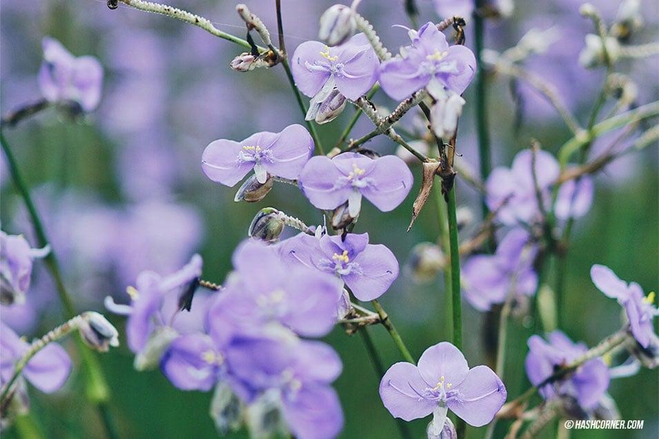 nghon-nak-flower-prachinburi-04