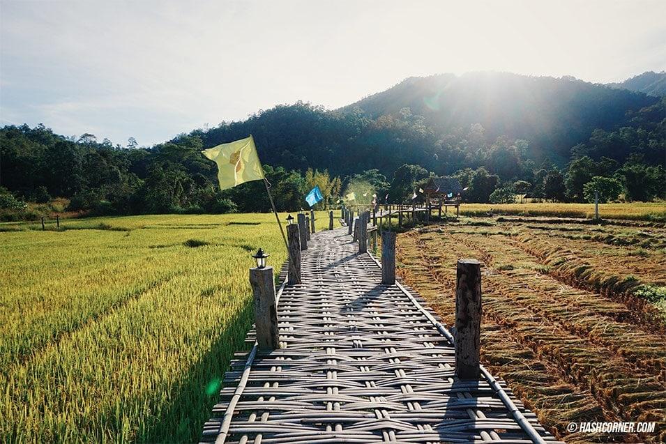best-of-pai-bamboo-bridge-02