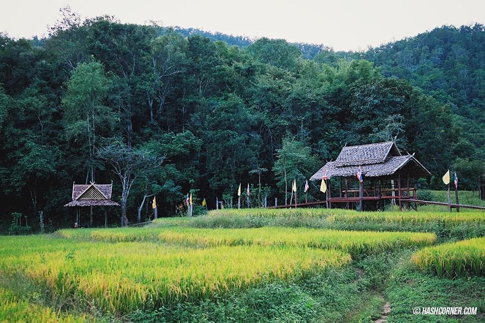 best-of-pai-bamboo-bridge-10