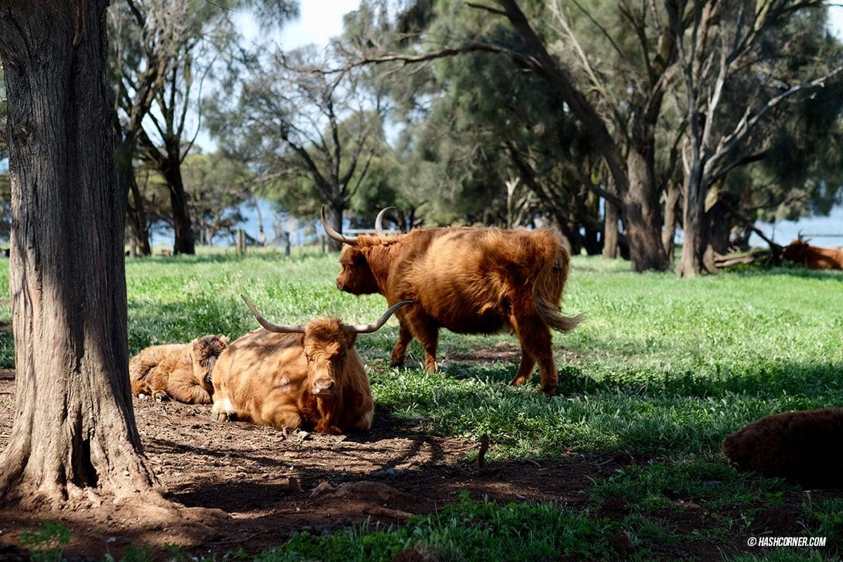 รีวิว Phillip Island (เกาะฟิลลิป) x เมลเบิร์น : เที่ยวออสเตรเลียเองแบบคูลๆ