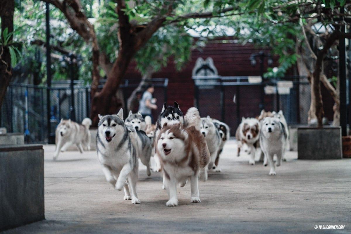 Dog Cafe Hopping : 3 คาเฟ่หมา เก๋กู๊ดสุดในกรุงเทพ