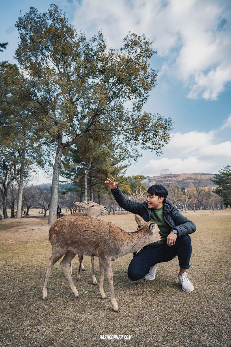 รีวิว นารา (Nara) x คันไซ ญี่ปุ่นสไตล์เที่ยวเก่ง