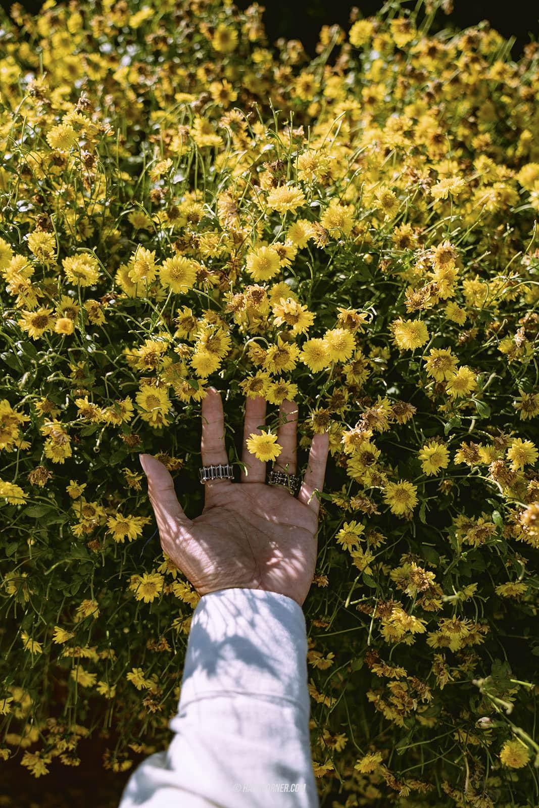 รีวิว แม่ริม x เชียงใหม่ เที่ยวชมดอกไม้และม่อนแจ่ม