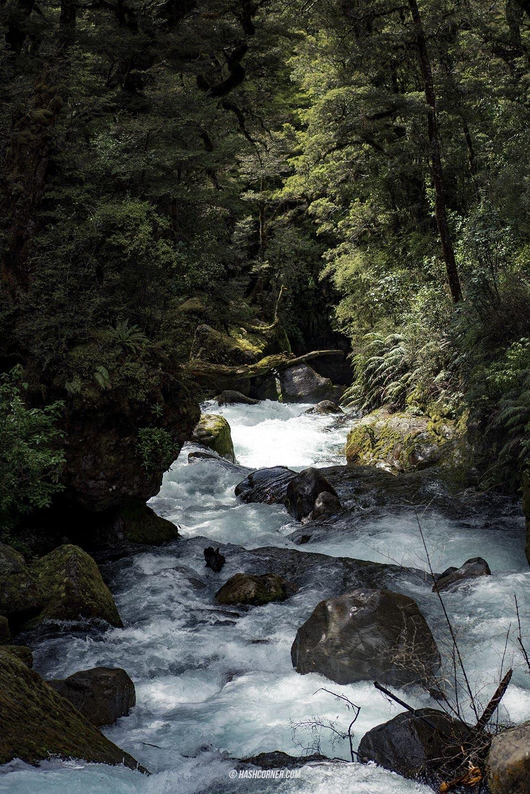 รีวิว ฟยอร์ดแลนด์-มิลฟอร์ดซาวด์ (Fiordland-Milford Sound) x นิวซีแลนด์ เกาะใต้